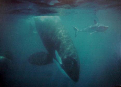 photos animaux préhistoriques Orca